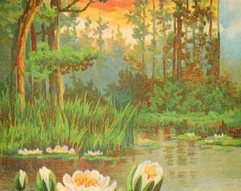 Antique SCENIC  WATERLILY Pond Sunset #2 Postcard -  INSTANT Digital download - trees birds marsh