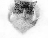 8x10in custom pet portrait created by me in graphite.