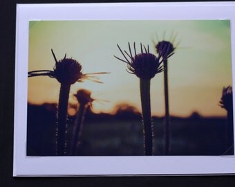 Sunset Sunflowers at McFarland Park, Greeting Card, Lomography