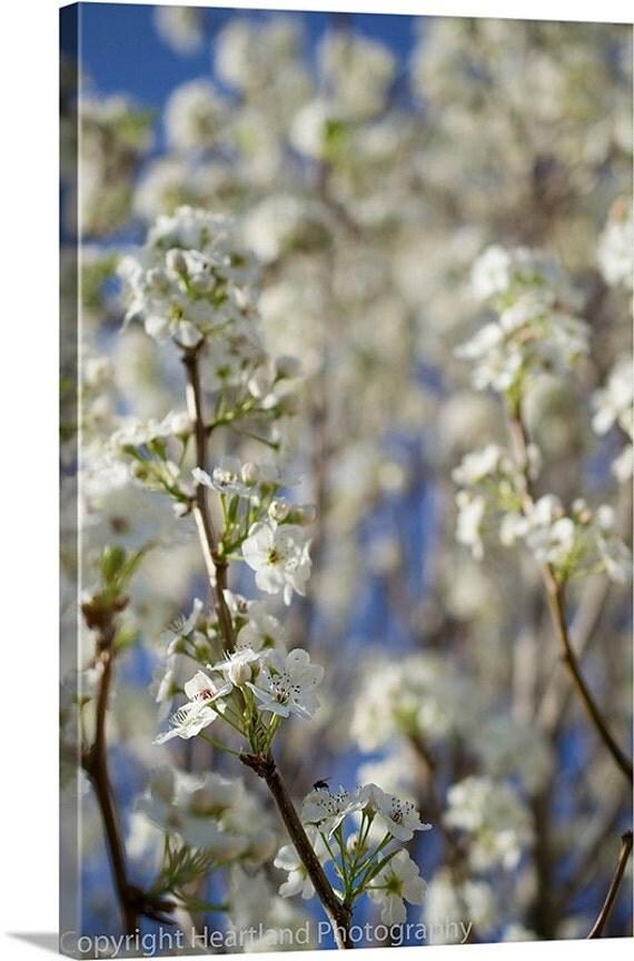White Flower Canvas, Canvas Wall Art, White and Blue, Spring Flowers, Pear Tree Canvas, Flower Wall Art, Nursery Decor, Romantic Decor