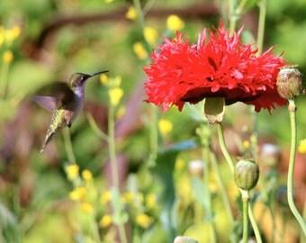 aming bird and poppy