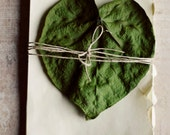 Leaf, green, cream, botanical print, fall, still life, love, heart, romantic, rustic, wall art, white, pages, fine art photograph