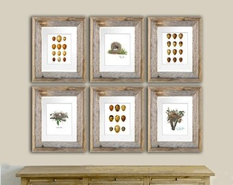 Easter Decor Bird Nest Prints Set Of 6 Eggs Print Cottage Spring Wall