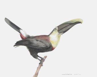 Toucan ORIGINAL large watercolor painting