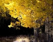 Aspen tree fall photo, Colorado art, fall tree photo, rustic decor, fall art, cabin decor, living room art, fall nature | Quiet Elegance