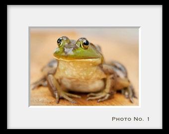 Bullfrog, 5x7 Fine Photo Boy's room home cottage decor Québec Canada Wall Artwork Wildlife Green frog Beige orange Portrait men picture gift