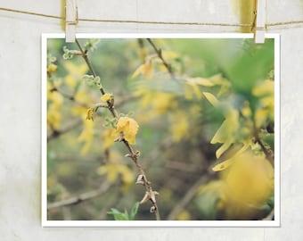 A Summer's Dance - botanical, fine art film photography, yellow flower photography, botanical photography