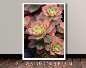 Succulent Plant Photography/ OPEN EDITION prints / Succulent  and Ice plant Photography / Pink, green, yellow, chartreuse, black ,