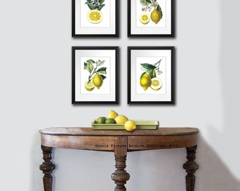 Kitchen Decor, Lemons Print, Kitchen Art, Fruit Print. Citrus Fruit Wall Art Set of 4. Yellow Wall Art. Vintage Botanical Art, gift for mom