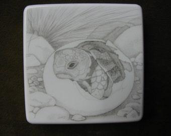 Scrimshaw of Baby Tortoise
