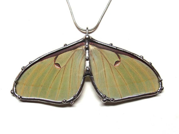 Real Luna Moth Necklace - Statement Necklace
