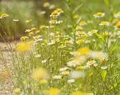 White & Yellow Wildflowers Photo 8x8 Print
