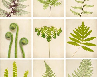 Botanical Prints, Botanical Art, Fern Art, Print Set, Nature Photography, Fine Art Photos, Woodland Decor Nature Photo Set, Set of 9 Prints