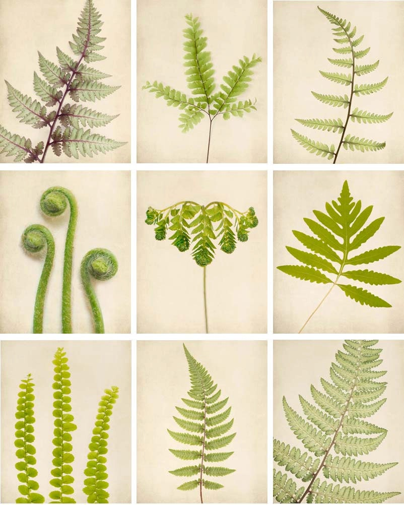 Fern Pictures Art Fern Art Print Set