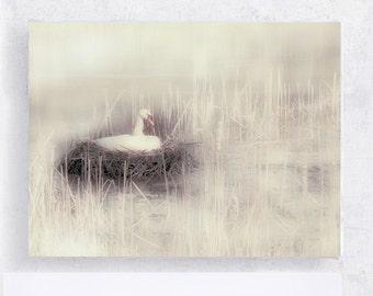 Swan Art - Bird Art - Labour of Love - Swan Nesting 5x7 Canvas Print on Wood Block  -  Photograph - Home Decor - Wall Art