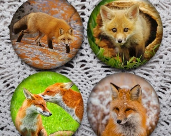 Foxy Faces -- Fox Photography Mousepad Coaster Set