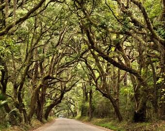 Spanish Moss Oak Trees Plantation, Charleston Art, Photo, Southern Lowcountry South Carolina Botany Bay Edisto Island SC Poster Print Rustic