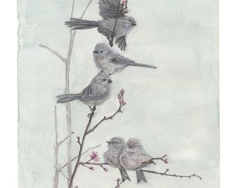 Bushtits on Flowering Cherry Branch