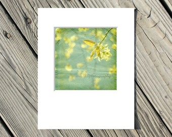 """Mint Green, Wall Decor, Nature Photograph, Flowers, Still Life Picture, Yellow, Mint- 5x5 inch Print Matted to 8x10 inches - """"Fantine"""""""