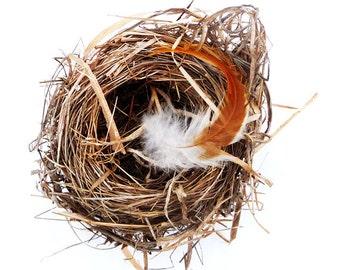 Fine Art Photography Bird Nest Feather Nature Beige Brown Natural
