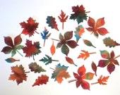 Tiny Felt Autumn Leaves Assortment 1