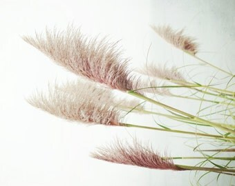 Botanical photography print sea grass pink dusty rose minimal modern wall art - Pink Sea Grasses