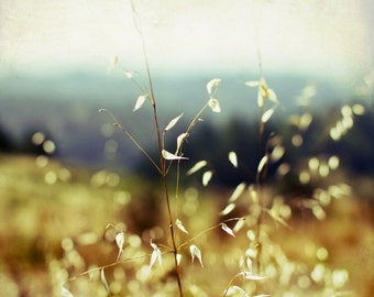 "Nature Photography | golden sunlit grasses | ochre gold olive forest green | dreamy landscape 8x8 16x16 print ""Sunlit Grasses"""
