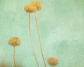 Winter flowers, yellow ochre, seafoam green, mustard yellow, harvest gold, simple decor, burnt orange minimalist art, pastel, cold outside