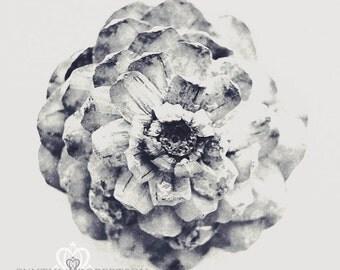 Rosette, Black and White, Fine Art Photography