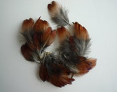 PHEASANT NECK FEATHERS, Earthy Tones, Natural, Not Dyed  / 750 - C