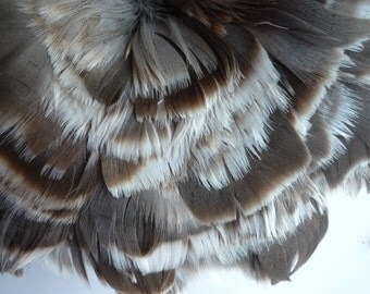 GOOSE COQUILLE FEATHERS , Natural / 419