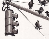 Pen and Ink  Sketch Drawing NYC Traffic Light Pigeons  Black and White Print