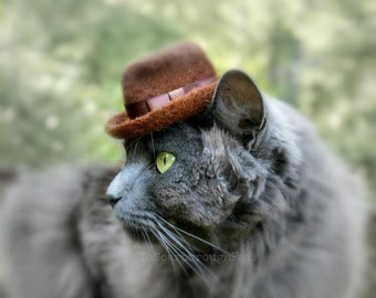 Fedora Cat Hat - Hand Felted Wool Hat - Hipster Hat for Pets