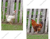 Set of 2 Rooster & Hen Chicken Bird Farm Photos Fine Art Photography Photo Prints
