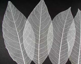 25 Bleached leaves-Skeletal leaves-Magnolia leaves-Peepul Leaves-Gift wrapping-Party Favors-Wedding invitations