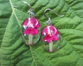 Oval Cabochon Earrings.  Hot pink Verbena behind crystal clear glass.