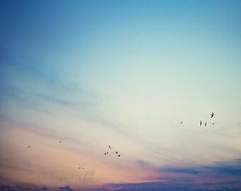 sunset nature photography / blue sky, birds in flight, pink clouds, purple, seagulls, beach / sunset flight / 8x10 fine art photograph