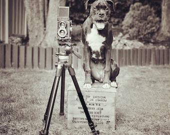 Dog Photographer Art Print - Boxer Puppy Dog Photo - 8x8 square