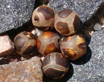 Agate Ancient Tortoise