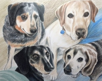 11x14 custom pet portrait in Colored Pencil