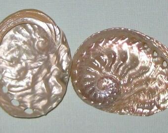 "Beach Decor - 5 Polished Silver Abalone Shells 2"" - Seashhells - Beach Wedding - Craft Seashells - Coastal Home Decor"