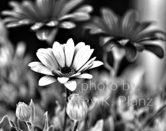 5x7 Dramatic Black and White Floral Photo