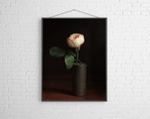 Peach Rose Floral Modern Flower Photography Large Scale Fine Art Photography