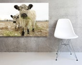 Stretched Fine Art Canvas of  Two White Cows  French Country Decor
