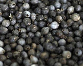 Job's Tears, Organic Job's Tears   Intriguing Plant with an Abundance of Uses