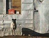 Dog Art Sorry We're Closed New Mexico Tienda - photographic giclee - Taos 8x12 Animal Photography  Man Cave Art Decoration