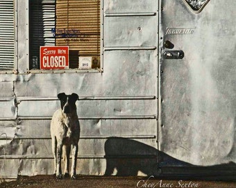 "Animal Photography Dog Lovers Art ""Sorry We're Closed"" New Mexico Tienda - photographic giclee - Taos 8x8 Man Cave Art Decor front of blinds"