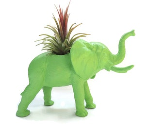 Air plant in apple green elephant planter. Great gift for teacher.