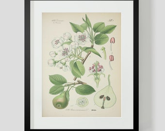 Botanical Pear Print Plate 420