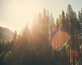 "Yosemite Photography, Travel Photography, Nature Tree Photograph, Landscape, Affordable Home Decor, Fine Art Photography, ""SUPER FLARE"""